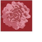 Serviett Duni 3-lag 24cm Autumn Floral (50) 184948