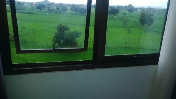 Pemandangan-sawah-menghijau-dari-jendela-Hotel-DPraya