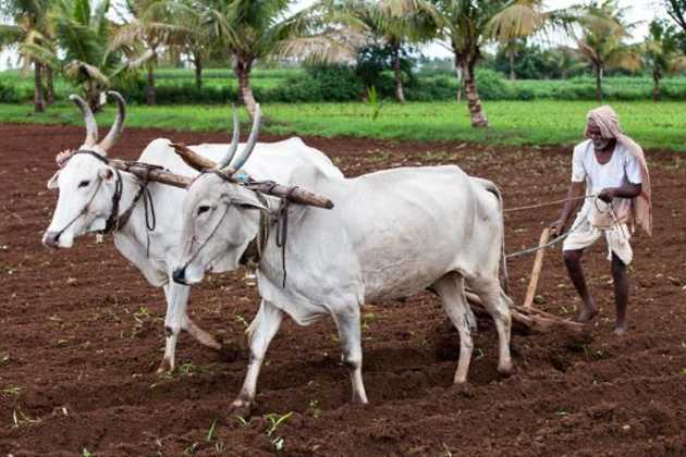 India's agriculture exports plunge 6 percent | Agrifish