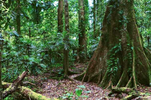 Australian rainforest
