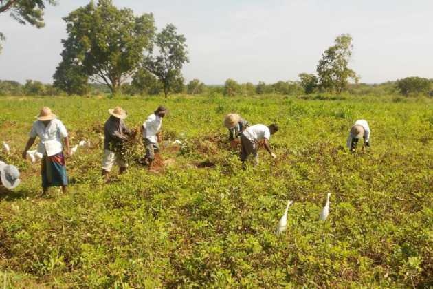 Sri Lanka farmer