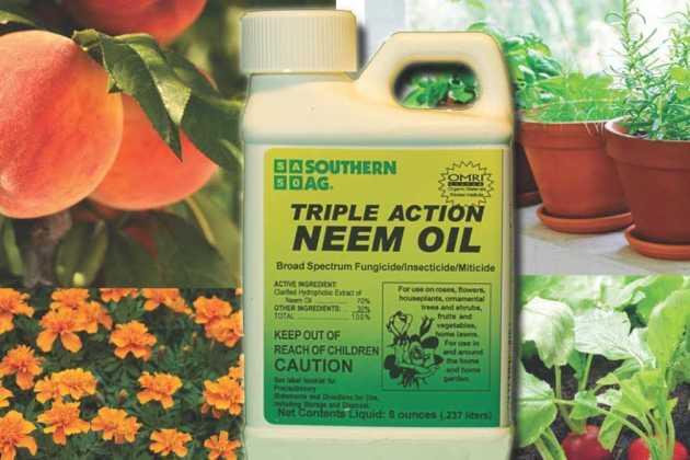 Triple Action Neem Oil