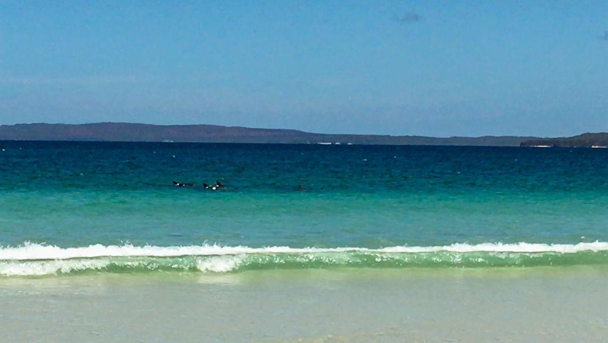 Dolphin spotting at Callala Beach
