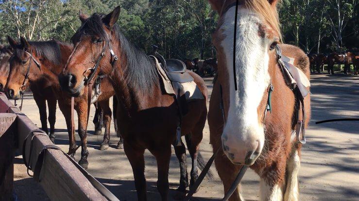Glenworth Valley Centre horses