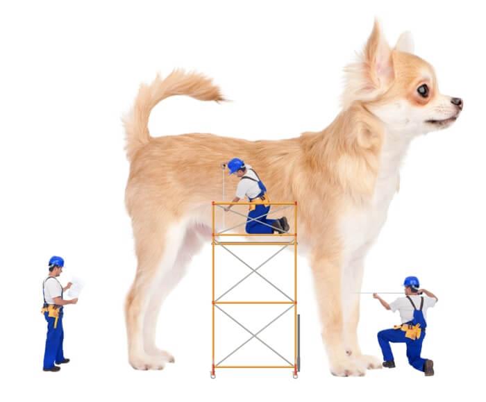 Un chien et des ouvriers qui prennent ces mensurations