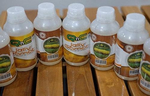Agen Penjual QnC Jelly Gamat di Sampang