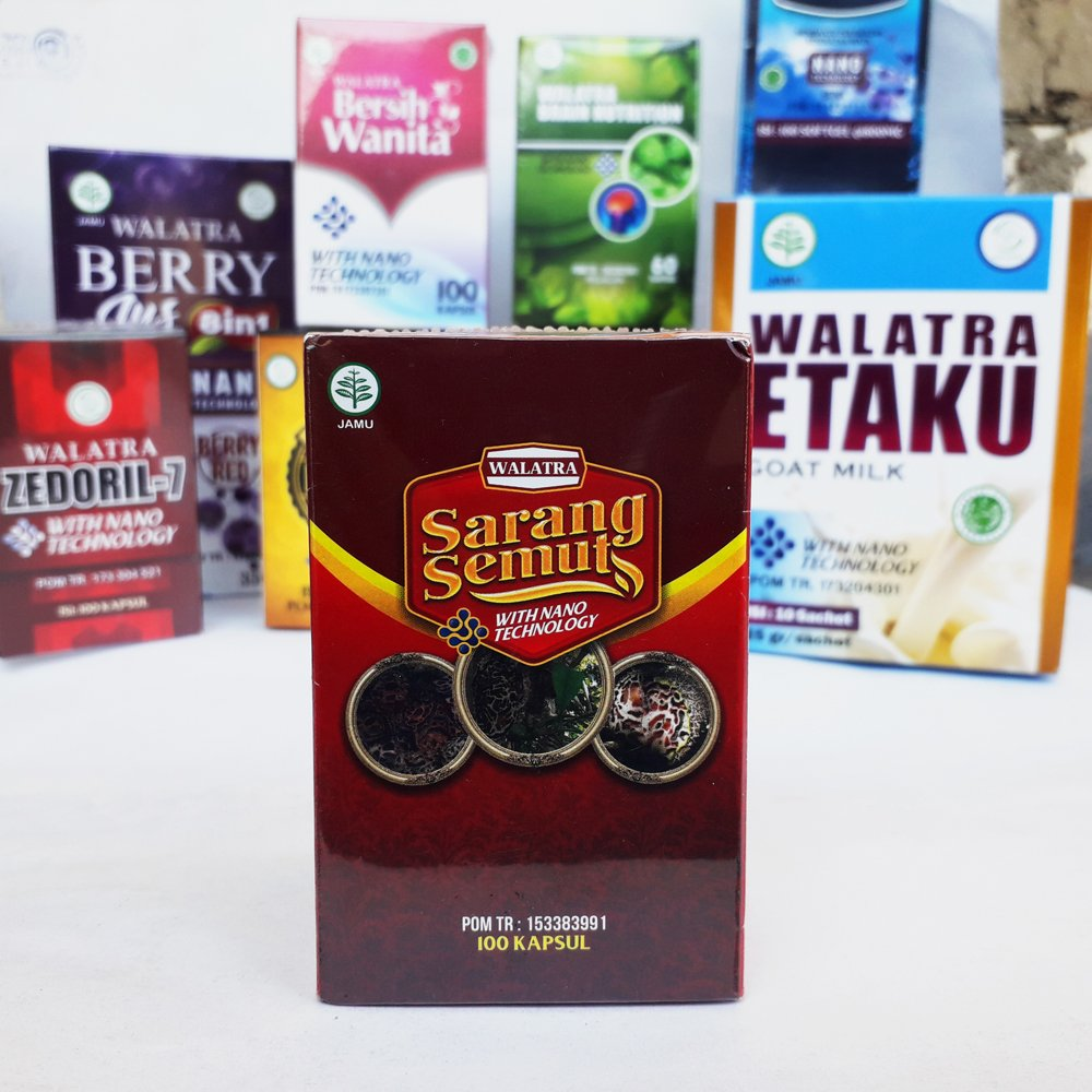 Jual Sarang Semut Papua di Ngasem