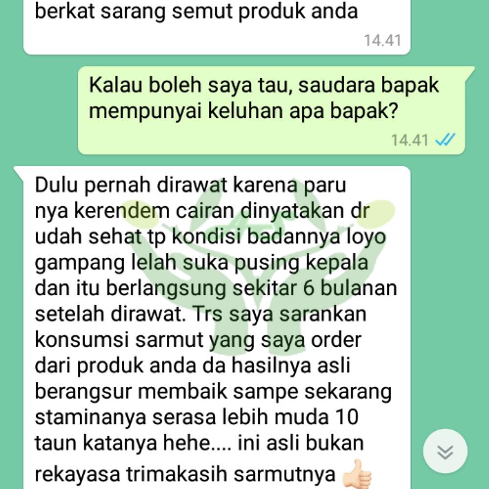 Jual Sarang Semut Papua di Dharmasraya