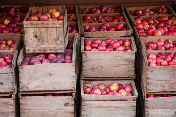 Apple Harvest, Apple Annie Orchard