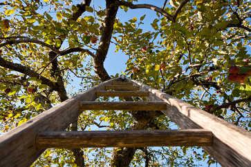 Apple Ladder, Apple Annie Orchard