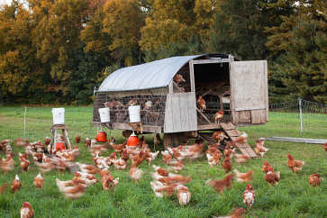 Mobile Chicken Coop, Wingate Farm