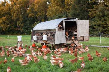 Mobile Chicken Coop, Wingate Farm