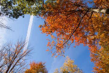 Vapor Trail on an Autumn Day
