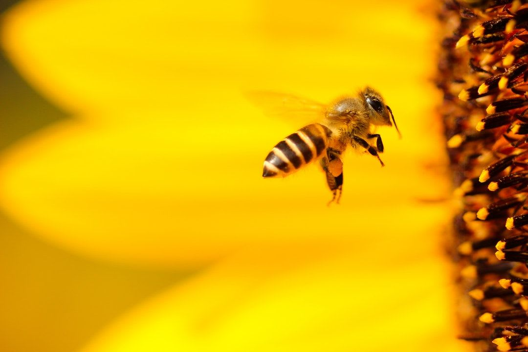 How much does a bee weigh?