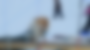 Ivakkak 2019: Northern Sled-Dog Race Across Nunavik