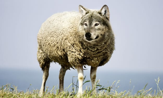 How to Spot a Narcissist in Sheep's Clothing