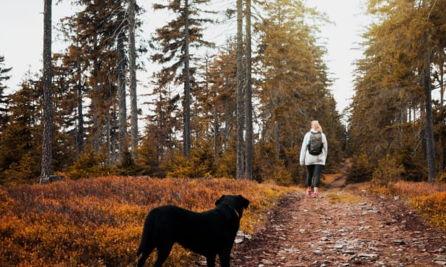 5 Tips to Enjoying the Great Outdoors with Your Dog