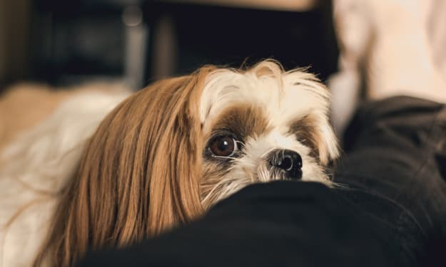 A Guideline to Minimize Your Dog's Shedding