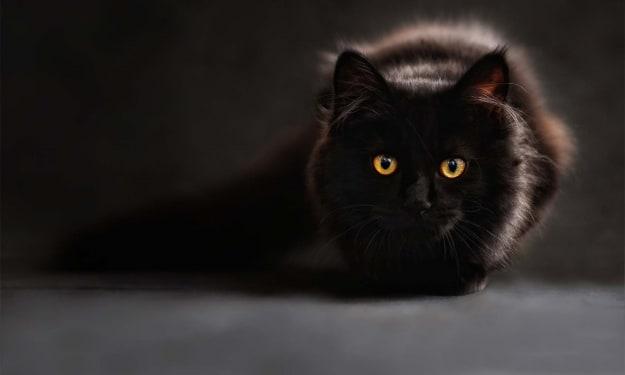 My Staring Cat