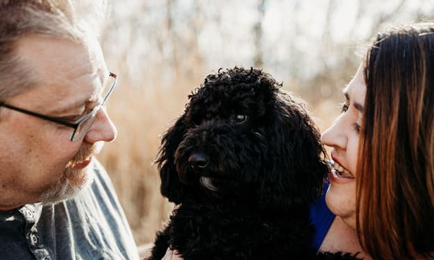 A Puppy Saved My Marriage