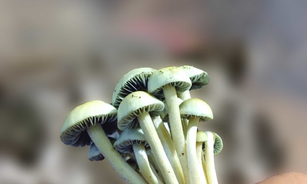 Magic Mushrooms should get legalized