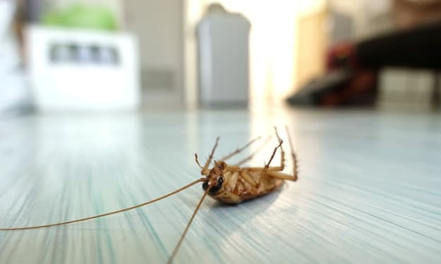 Pest Control for Cockroaches - The Need for an Hour