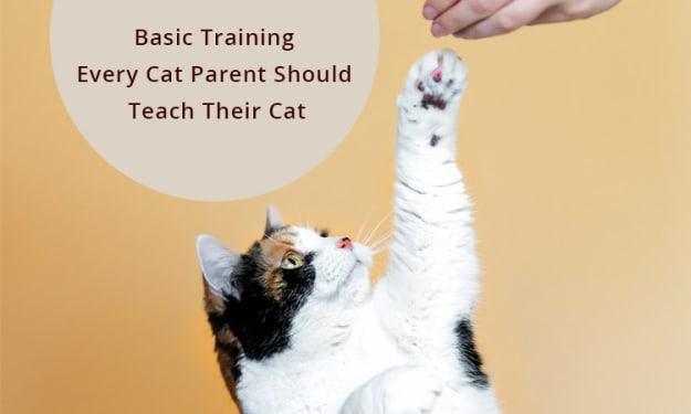 Basic Training Every Cat Parent Should Teach Their Cat