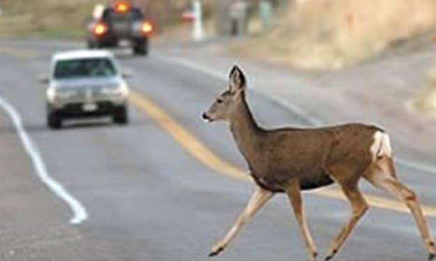 I am scared of deer.