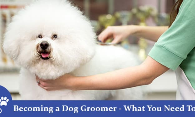 Becoming a Dog Groomer – What You Need To Do?