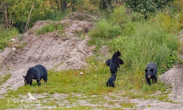 Alaska's Wildlife Experience