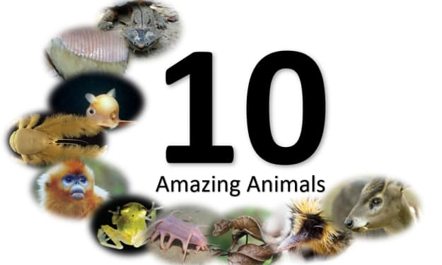 10 Amazing Animals You Need To Know Exist
