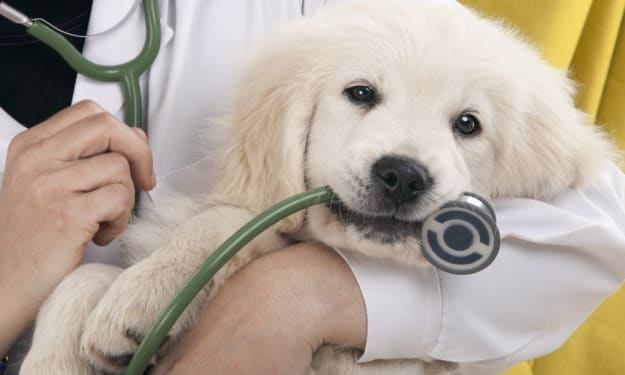 Checklist Use During Pet Wellness Visits