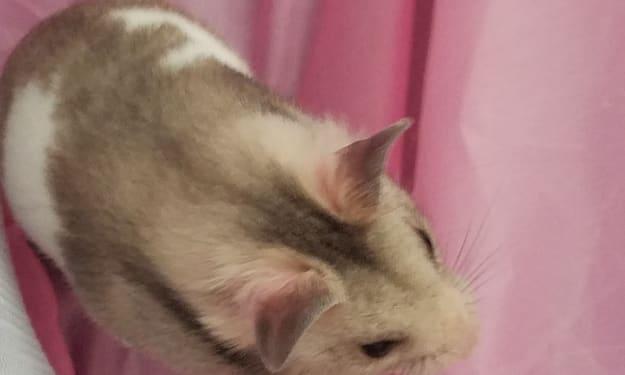 Hamster Mayhem