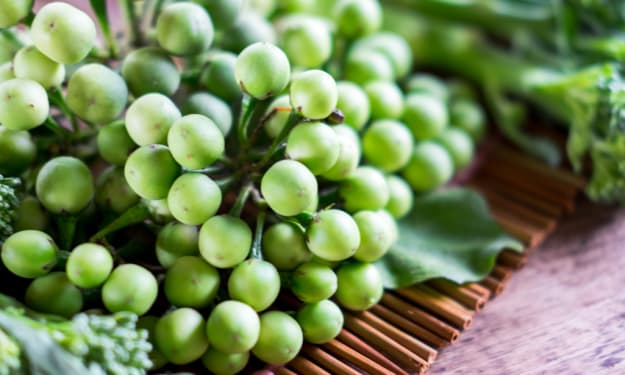 20 Benefits of Health Medicinal from Solanum Torvum/ Turkey Berry