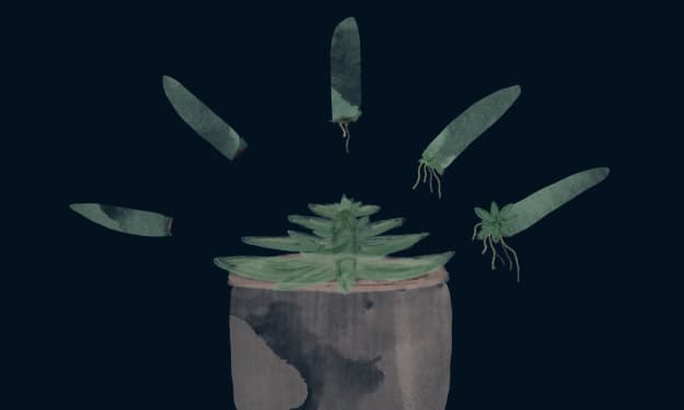 How to Grow Your Own Succulents