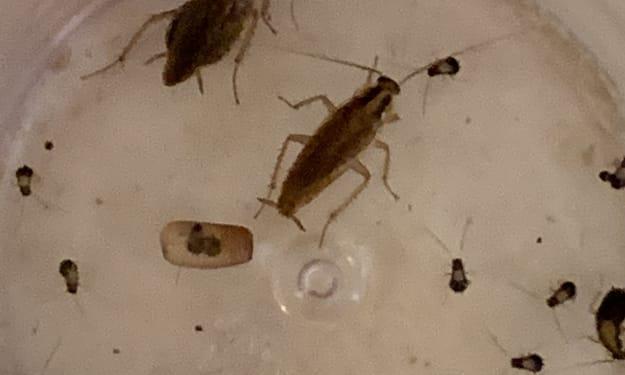Roach Case