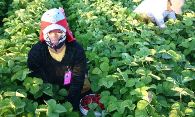 """Perspective on """"Fresh Fruit, Broken Bodies: Migrant Farmworkers in the United States,"""" by Seth Holmes."""