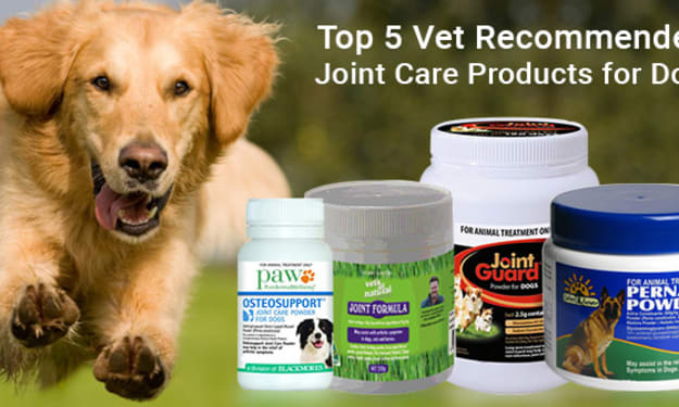 Top 5 Vet Recommended Joint Care Products for Dogs
