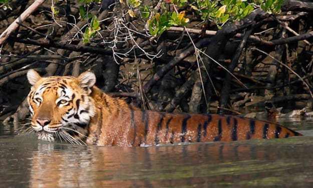 The Alluring Sunderbans- A great travel destination in the biggest delta of the world