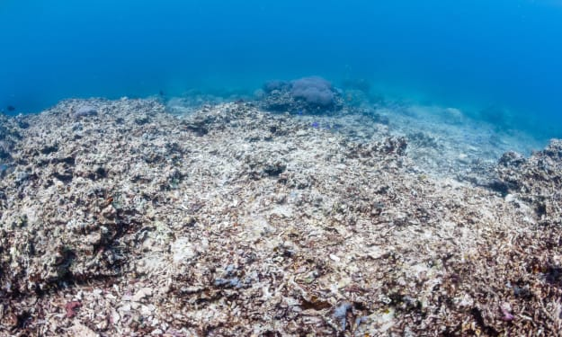 Our Oceans Are Dying