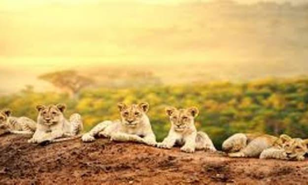 7 Must-Visit Destinations in Kenya