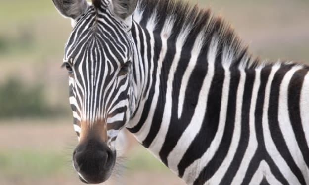 36 reasons why Kenya should be your preferred safari destination