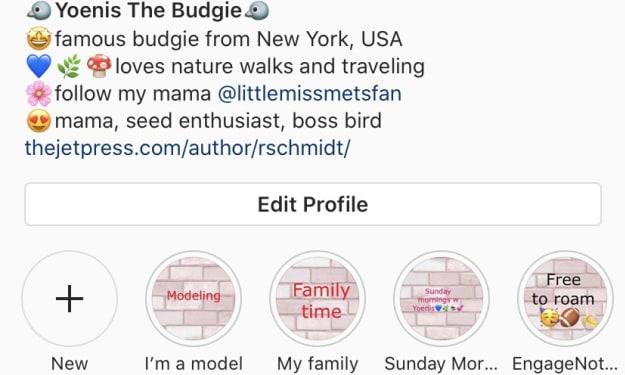 Mets fan names bird after Yoenis Cespedes