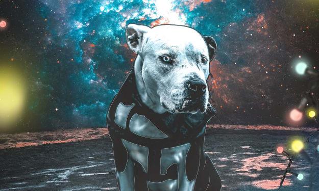 Dog Days of Eternity