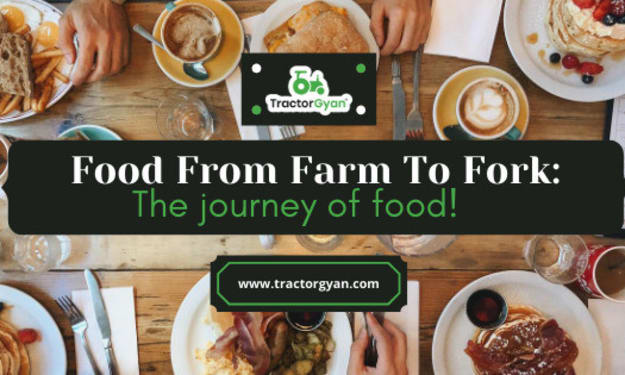 From farm to fork: The journey of your food!