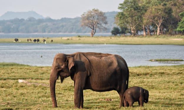 How is Sri Lanka as a Tourist Destination?