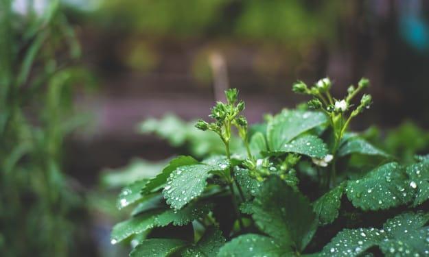Environmental Problems I Run Into While Gardening