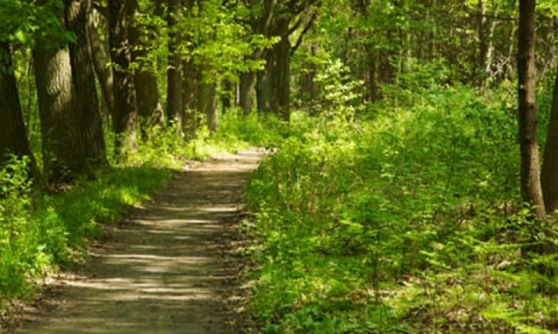 Mindful Walking for Beginners