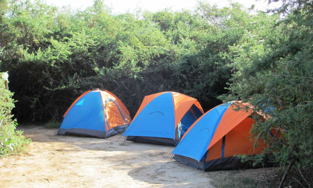 How to save pennies by camping safaris