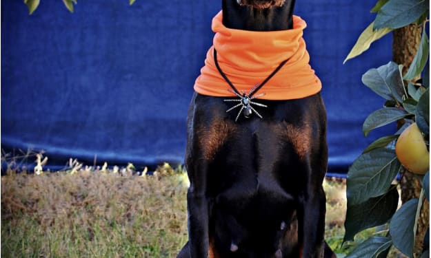 """In the US, dogs """"celebrate"""" Halloween on a grand scale"""